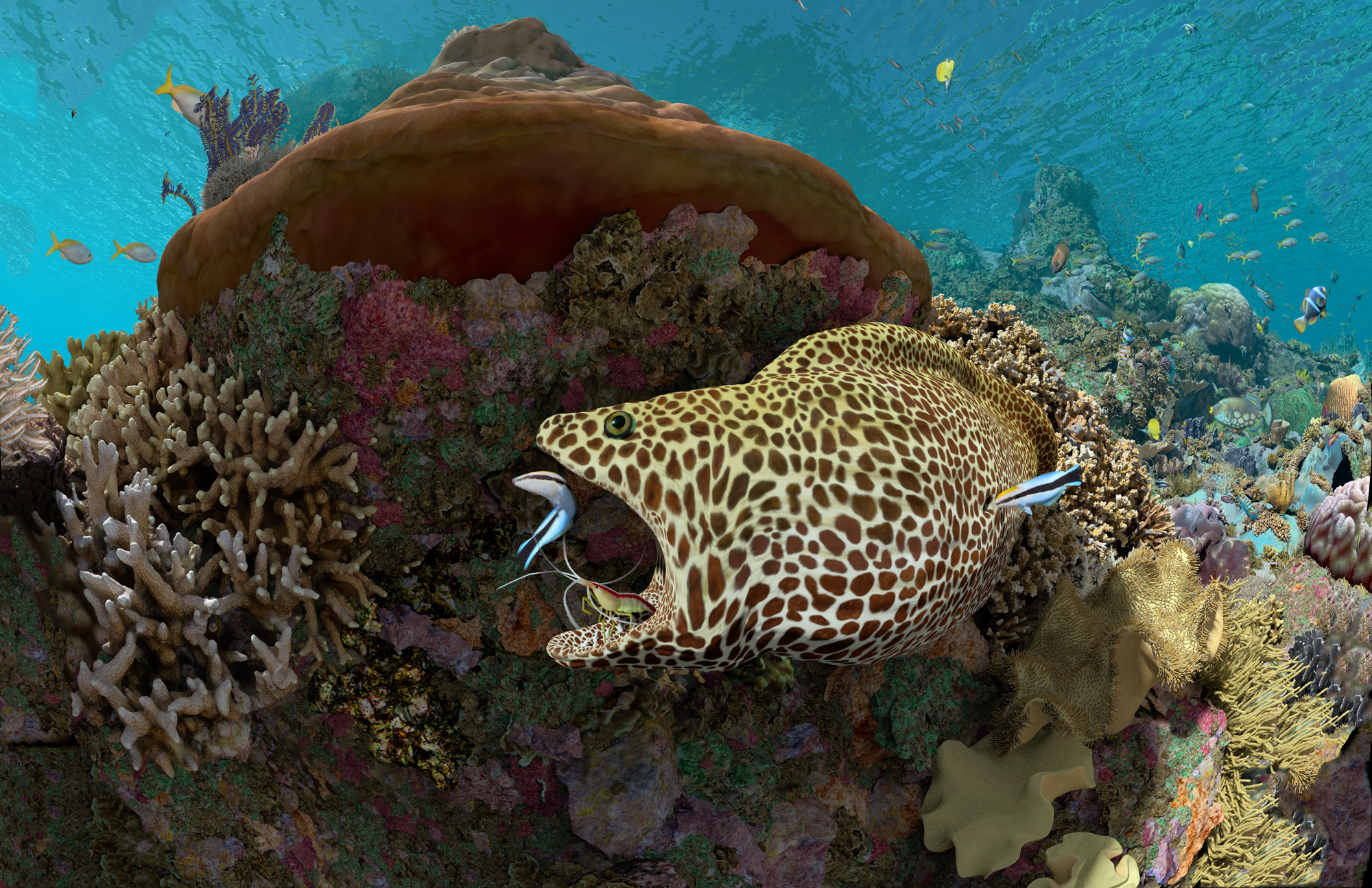 LNP: Expedition Reef